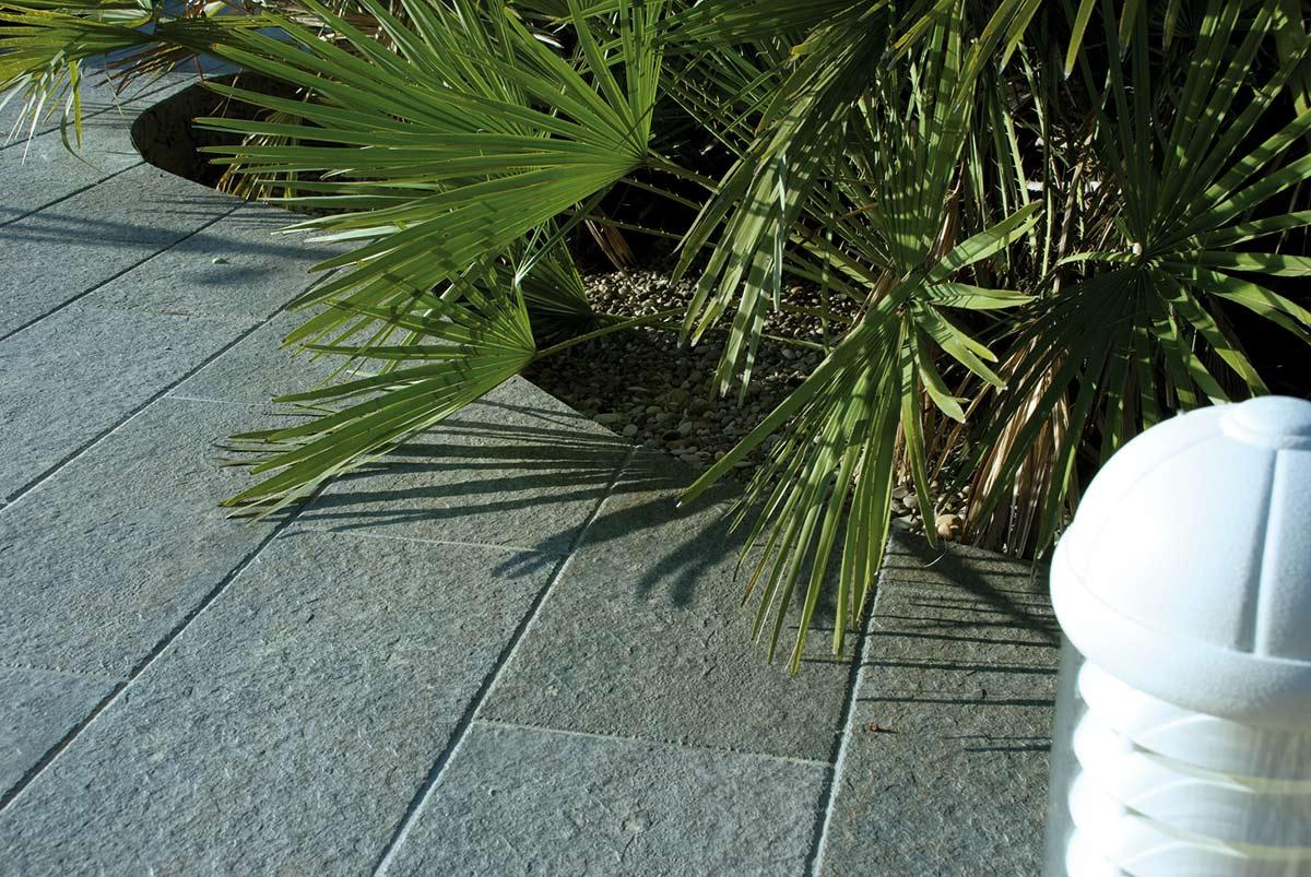 Palmera en el suelo de un jardin